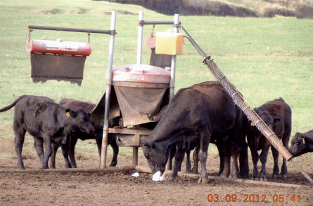 Easy Way Cattle Saver in the field